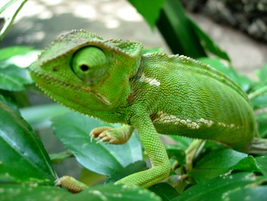 Selection Sunday A Sweet 16 Of Cool Animal Discoveries